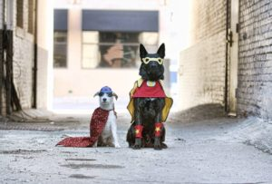 Dog Superheros
