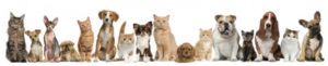 dog cats banner